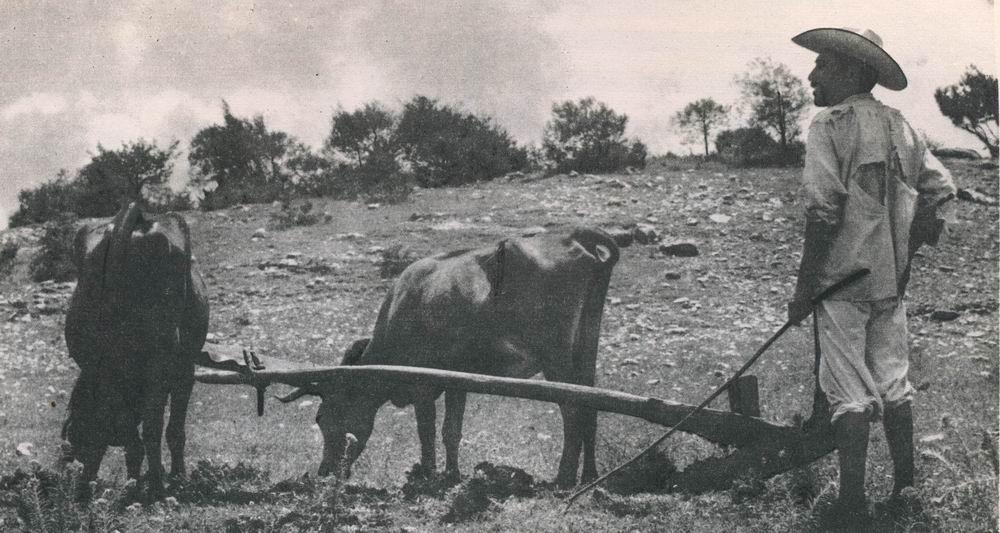 Mixtekischer Bauer mit Holzpflug in der Nähe von Apoala (Mixteca Alta, Nord-West-Oaxaca). Noch über 70000 Mixteken leben in dem 2500 Meter über dem Meere gelegenen Hochland. Sie führen ein ärmliches und zurückgezogenes Leben, und nur die Ortsnamen wie Tilantongo und Chacaltongo erinnern noch an die mäch¬tigen Dynastien, deren Geschichte die Bilderhandschriften bis in das Jahr 692 zurückverfolgen.